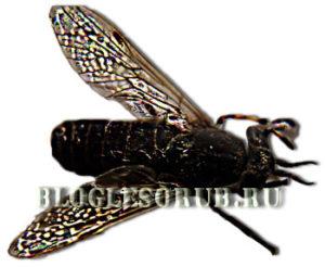 Лиственничная муха фото