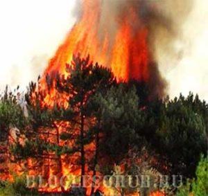 лесные пожары картинки