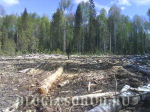 штраф за мусор в лесу