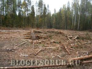 очистка леса от захламленности