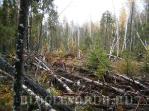 мусор в лесу фото