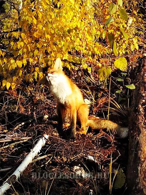лисенок у дерева фото
