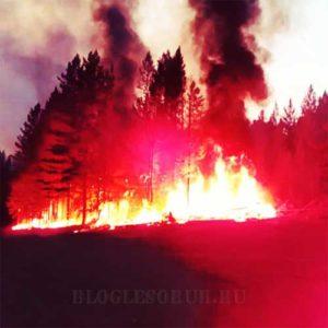 лесные пожары в иркутской области фото