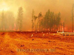 лесные пожары в иркутской области 2015 картинки