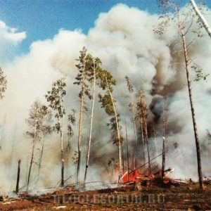 пожар в иркутской области фото