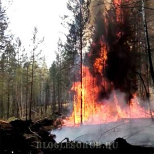 лесные пожары в иркутской области 2015 фото