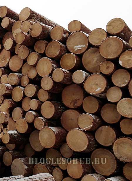 размещение лесных ресурсов фото