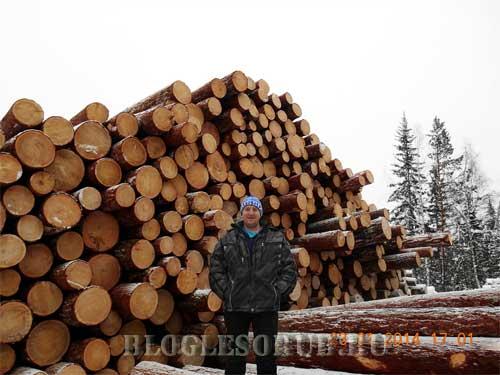 штабеля леса фото