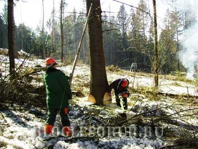 валка дерева картинки