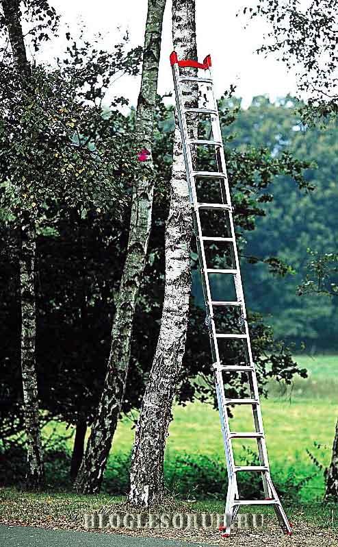лестница-арбориста фото