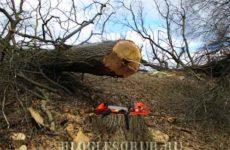 Особенности валки деревьев клиньями