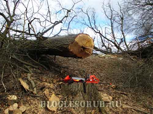 сваленное дерево клином фото