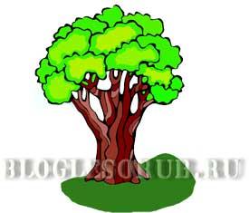 раскидистое дерево на волоке картинки