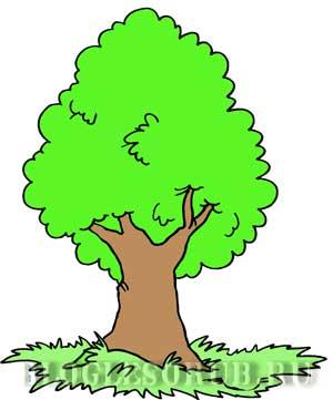 раскидистое-дерево картинки