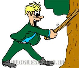 измерение толщины дерева картинки