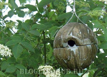гнездовье-для-королька фото