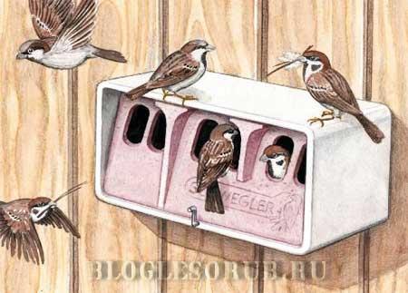 гнездовье-для-воробьев картинки