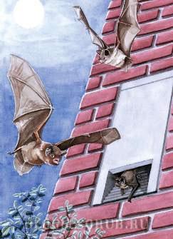 жилье-для-летучих-мышей картинки