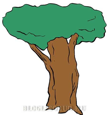 исполинское-дерево картинки