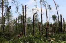 Разработка ветровально-буреломных лесосек в Белоруссии