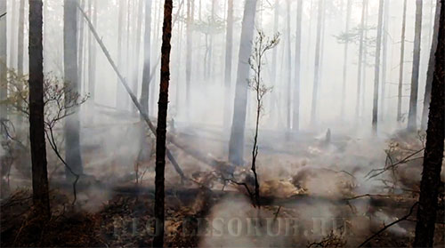 лесной-пожар фото