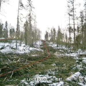 Как очистить лесосеку