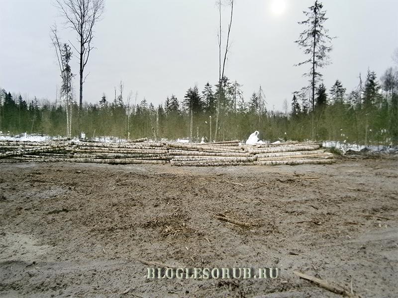 погрузочная-площадка-очистка-лесосеки фото