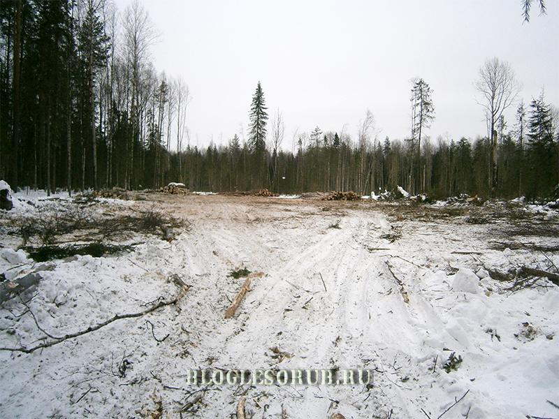 погрузочная-площадка-при-действующей-лесосеке фото