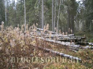 уборка захламленности в лесах фото