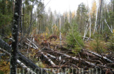 Захламленность леса