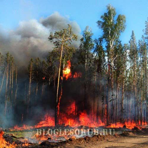 пожар в лесу в иркутской области фото