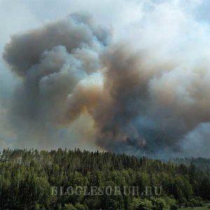 пожары в забайкалье фото