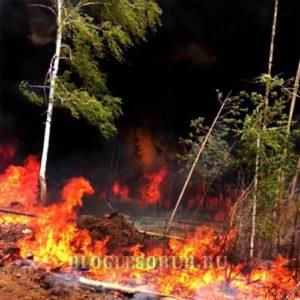 лесные пожары в забайкалье