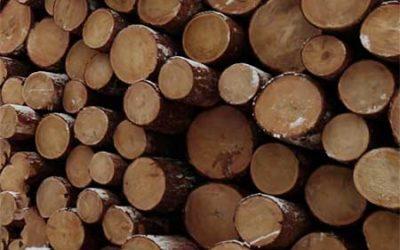 Размещение лесных ресурсов