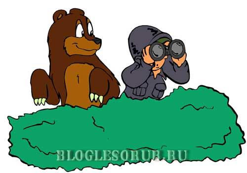 Встречи-с-медведями фото