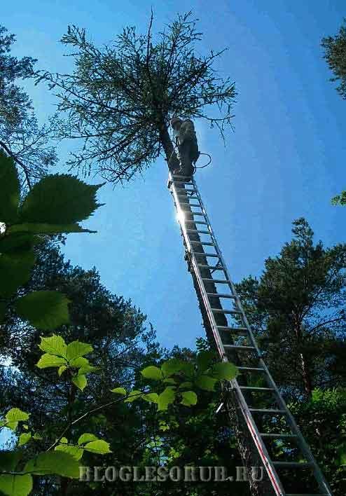 арборист-на-лестнице фото