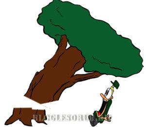 падение дерева на человека картинки