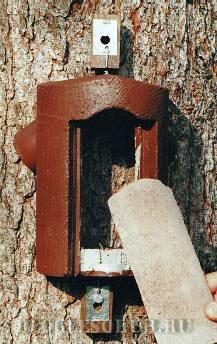 гнездовье-для-мухоловки фото