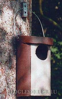 гнездовье-для-совы фото