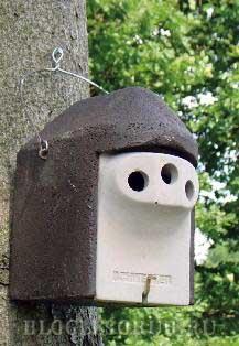 гнездовье-от-куницы фото