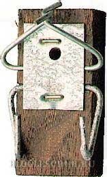 гнездовье-с-защитой фото