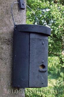 гнездовья-в-лесопарках фото