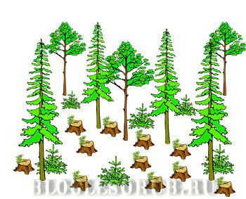 незаконная-рубка-среди-лесорубов картинки