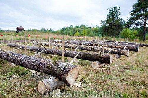 этап-для-вальщкиов-леса фото