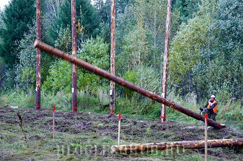 валка-деревьев фото