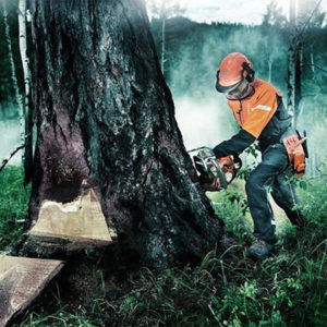 Какой метод лесозаготовки лучше