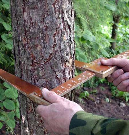 Как лесхоз высчитывает кубатуру при выделении деляны