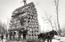 Лесозаготовка в США в начале 20 века